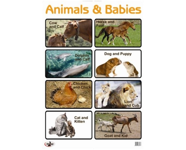 Animals and Babies Write and Wipe Educational Poster 1