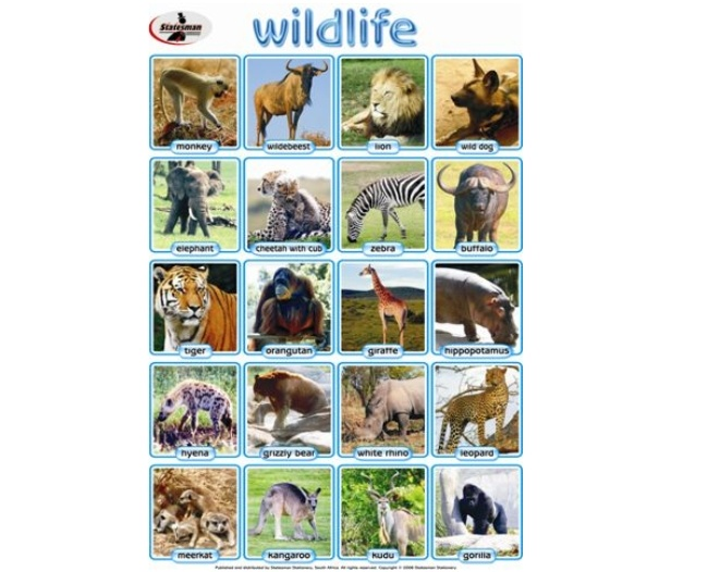 Wildlife Write and Wipe Educational Poster 1