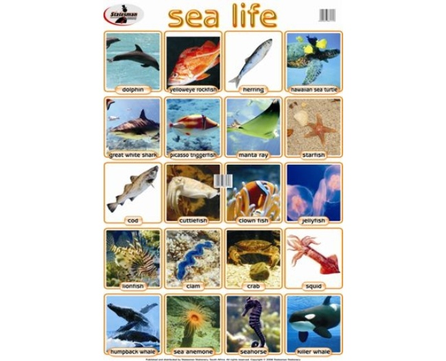 Sea Life Write and Wipe Educational Poster 1