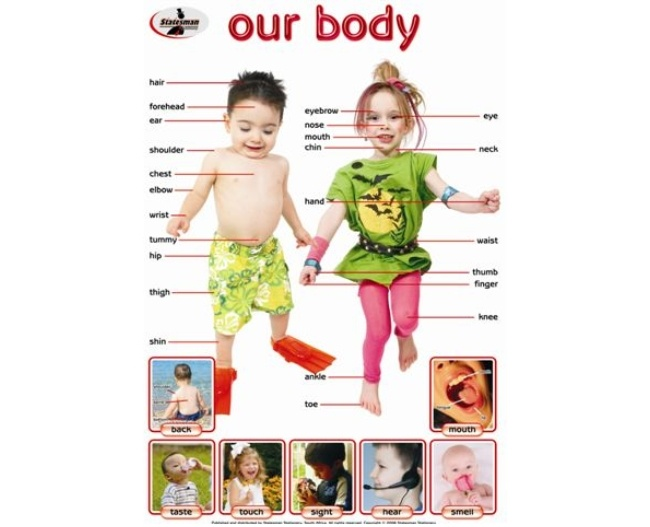 Our Body Write and Wipe Educational Poster 1