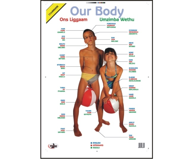 Our Body Write and Wipe Educational Poster in English, Afrikaans and Zulu 1
