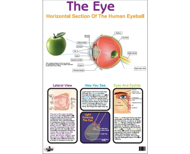 The Eye  Write and Wipe Educational Posters 1